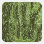 Parque nacional de Costa Rica, Arenal, selva Pegatina Cuadrada