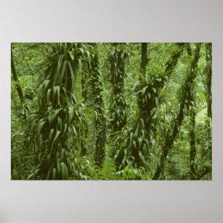 Parque nacional de Costa Rica, Arenal, selva tropi Posters