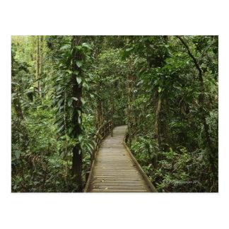 Parque nacional de Daintree (patrimonio mundial 2  Tarjeta Postal