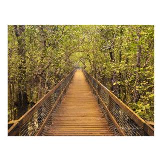 Parque nacional de Daintree (patrimonio mundial de Tarjetas Postales