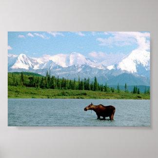 Parque nacional de Denali Posters