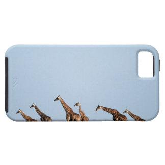 Parque nacional de Etosha, Namibia 2 iPhone 5 Protectores