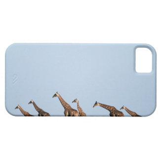 Parque nacional de Etosha, Namibia 2 iPhone 5 Carcasas