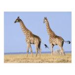 Parque nacional de Etosha, Namibia 3 Postal