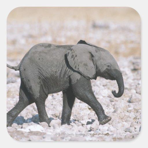 Parque nacional de Etosha, Namibia Pegatina Cuadrada