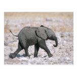 Parque nacional de Etosha, Namibia Postal