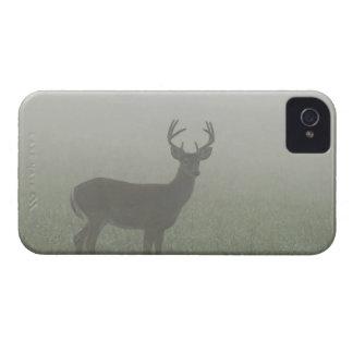 Parque nacional de Great Smoky Mountains, Tennesse iPhone 4 Case-Mate Cárcasas
