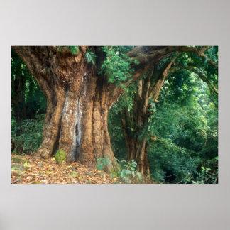 Parque nacional de Haleakala del baniano Impresiones