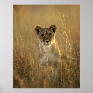 Parque nacional de Hwange, Zimbabwe Poster