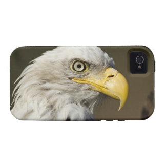 Parque nacional de Katmai, Alaska iPhone 4/4S Carcasas