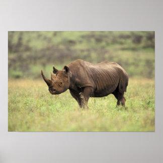 Parque nacional de Kenia, Nairobi. Rinoceronte neg Póster