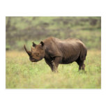 Parque nacional de Kenia, Nairobi. Rinoceronte Postales