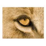 Parque nacional de Kruger, provincia del Limpopo, Postal