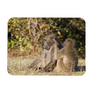 Parque nacional de Kruger, Suráfrica Imán Flexible