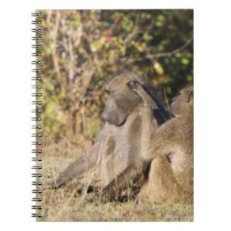 Parque nacional de Kruger, Suráfrica Libretas Espirales