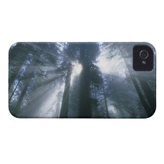 Parque nacional de la secoya, el condado de Del Case-Mate iPhone 4 Cobertura