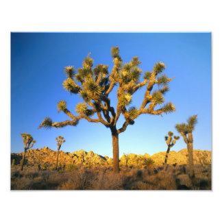 Parque nacional de la yuca, California. LOS E.E.U. Cojinete