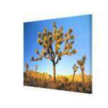 Parque nacional de la yuca, California. LOS E.E.U. Impresión En Lienzo Estirada