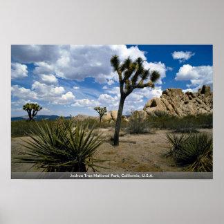 Parque nacional de la yuca, California, los E.E.U. Posters