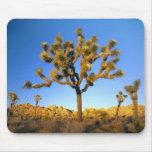 Parque nacional de la yuca, California. LOS E.E.U. Tapetes De Ratón