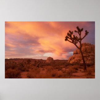 Parque nacional de la yuca - salida del sol posters