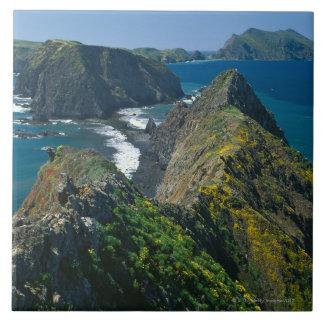 Parque nacional de las Islas del Canal, meridional Azulejo Cuadrado Grande