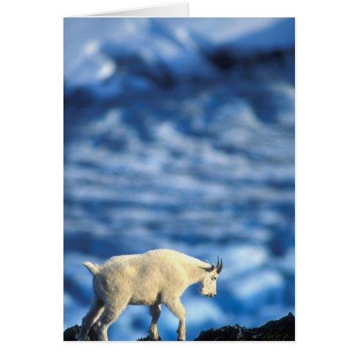 Parque nacional de los E.E.U.U., Alaska, fiordos d Tarjeta