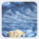 Parque nacional de los E.E.U.U., Alaska, fiordos Calcomania Cuadrada Personalizada