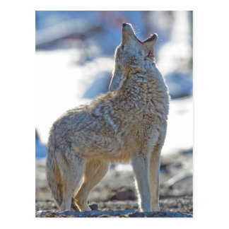 Parque nacional de los E.E.U.U., Wyoming, Tarjetas Postales