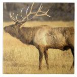 Parque nacional de los E.E.U.U., Wyoming, Yellowst Azulejo