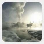 Parque nacional de los E.E.U.U., Wyoming, Yellowst Calcomanías Cuadradas Personalizadas
