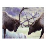 Parque nacional de los E.E.U.U., Wyoming, Yellowst Postal