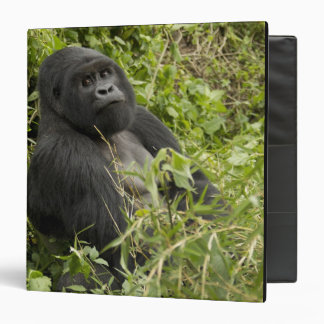 """Parque nacional de los volcanes, gorila de montaña carpeta 1 1/2"""""""