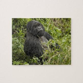 Parque nacional de los volcanes, gorila de montaña rompecabezas