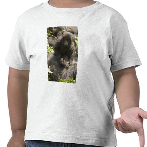 Parque nacional de los volcanes, gorila de camisetas