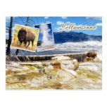 Parque nacional de Mammoth Hot Springs, Yellowston Tarjetas Postales