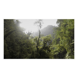 Parque nacional de Manu Posters