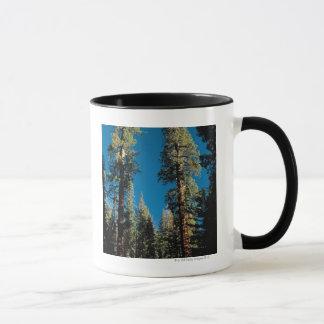 Parque nacional de secoya, California