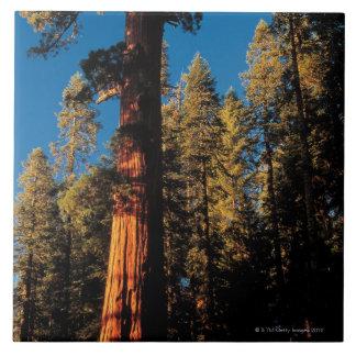 Parque nacional de secoya, California 2 Azulejo Cuadrado Grande