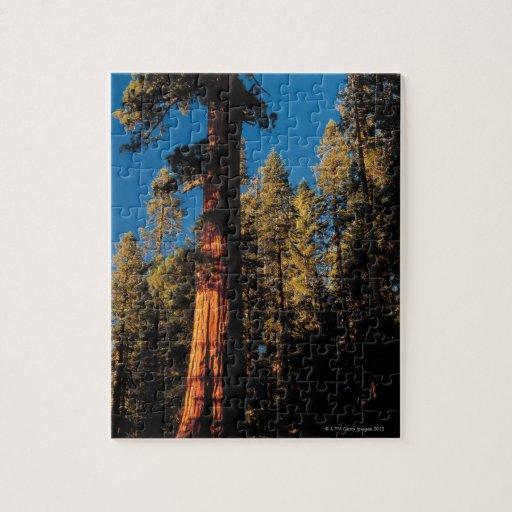 Parque nacional de secoya, California 2 Puzzles