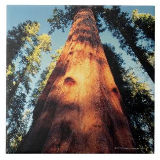 Parque nacional de secoya, California 3 Azulejo Cuadrado Grande