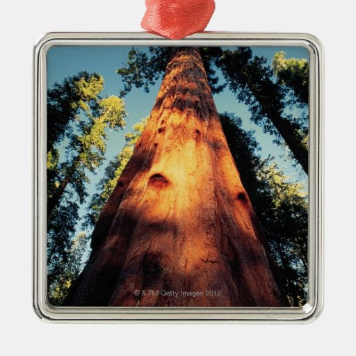 Parque nacional de secoya, California 3 Adorno Cuadrado Plateado
