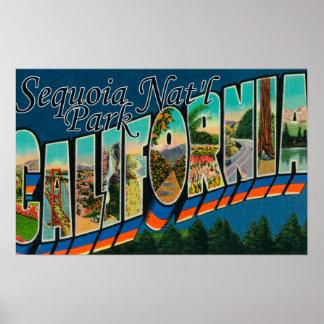 Parque nacional de secoya, California Impresiones