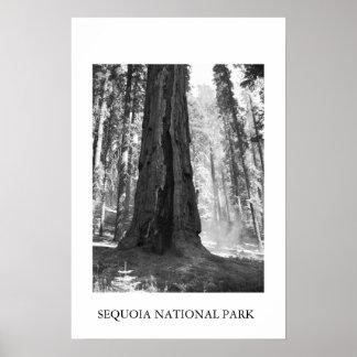 Parque nacional de secoya poster