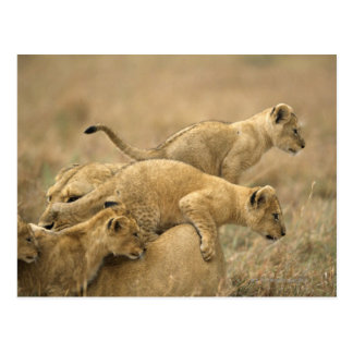 Parque nacional de Serengeti, Tanzania 2 Tarjeta Postal