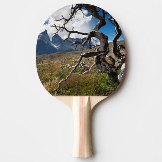 Parque nacional de Torres del Paine, árboles Pala De Ping Pong