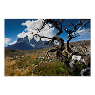 Parque nacional de Torres del Paine, árboles Póster