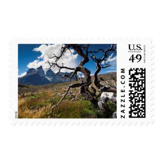 Parque nacional de Torres del Paine, árboles Sellos