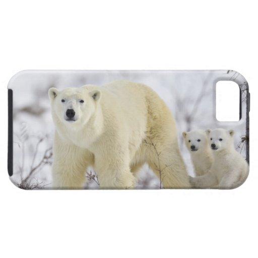 Parque nacional de Wapusk, Canadá iPhone 5 Case-Mate Coberturas