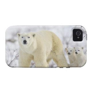 Parque nacional de Wapusk, Canadá Vibe iPhone 4 Carcasa
